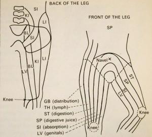 W des tissus de la jambe
